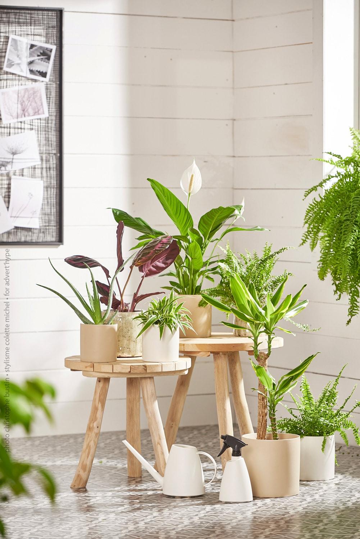 Stylisme photo – agence – Plantes d'intérieur